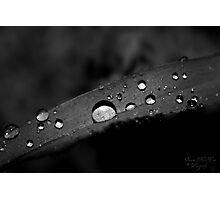 Blade Photographic Print