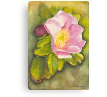 Rambling Rose on a Danish beach Canvas Print