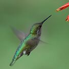 For me New Year means....a lot of hummingbirds by loiteke