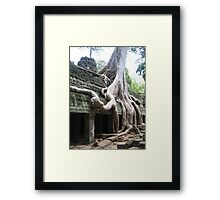 Wild roots Framed Print