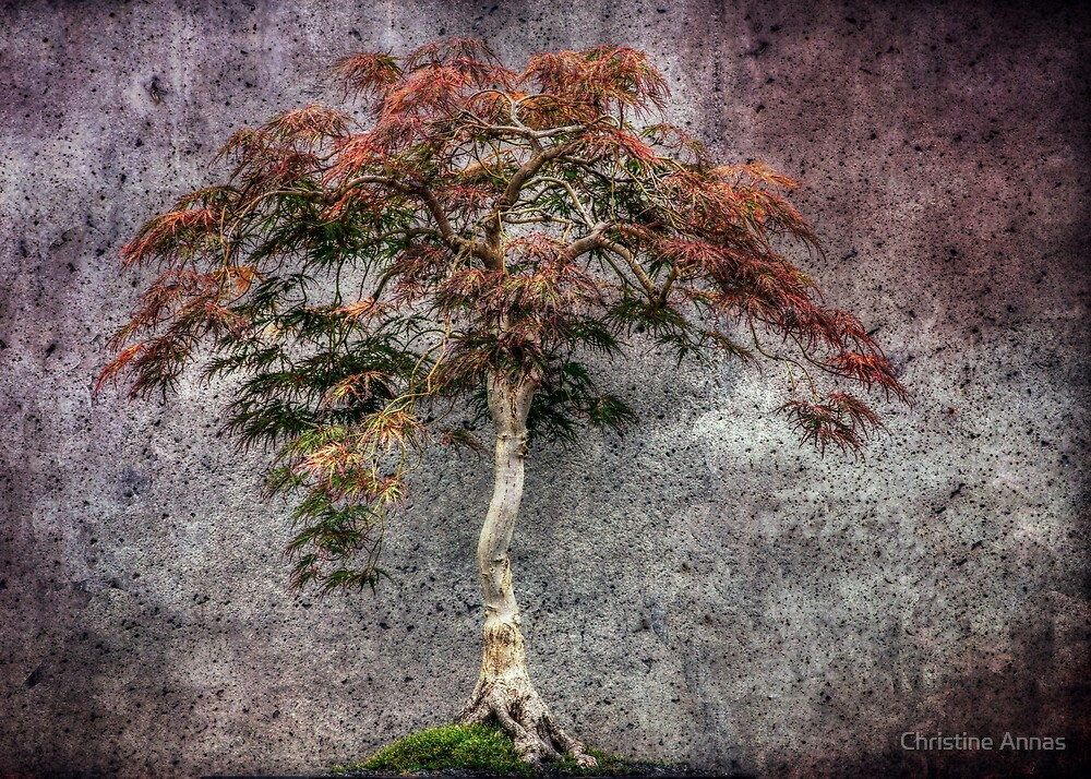 Japanese Maple by Christine Annas