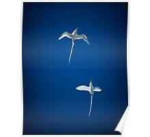 Paradise Birds on Petite Island Poster