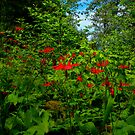Wild Columbine by Charles & Patricia   Harkins ~ Picture Oregon