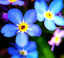Forget-me-not  by mariamariamaria