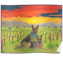 German Shepherds At Sunset Poster