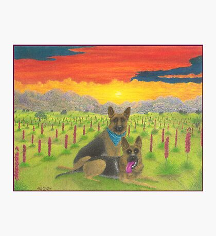 German Shepherds At Sunset Photographic Print