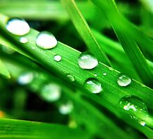 After the Rain - Water Droplets by mariamariamaria