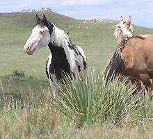 Wild Spanish Mustangs by Winthrop Brookhouse
