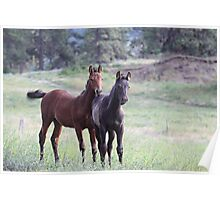 Horses on the Highway Poster