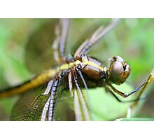 Dragon Fly  Macro Photographic Print