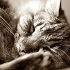 Let Sleeping Cats Lie by KAGPhotography