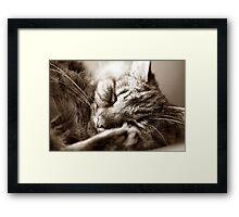 Let Sleeping Cats Lie Framed Print