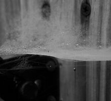 Spider Web and Gate Latch in black and white by mikrin