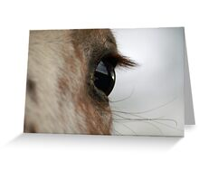 window of the soul Greeting Card