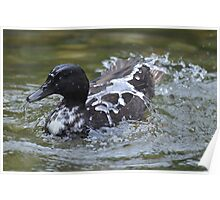 """""""Like Water Off a Duck's Back...""""! Poster"""