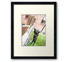 I can fly I can fly Framed Print
