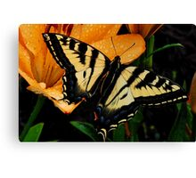 Beautiful Tiger Swallowtail Canvas Print