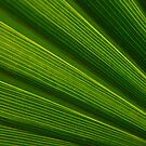 Green Energy by Shaun Colin Bell