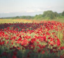 A corner of a field by SkinkArt