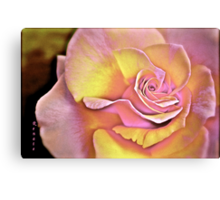 Rose in Pastel colours.  Canvas Print