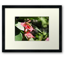 "Crown of Thornes ""flower"" with Yellow Jack Framed Print"
