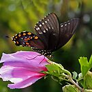 Summertime Swallowtail by Susan Blevins