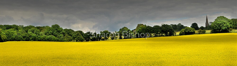 Panorama of rape seed field on the South Downs, UK by Sharon Bishop