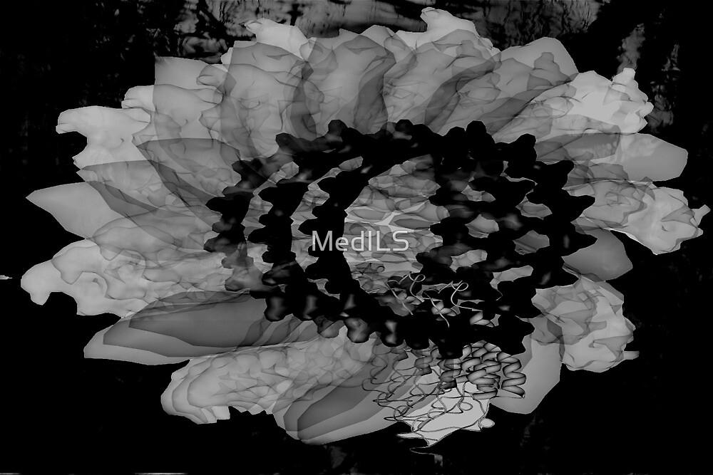 Chimera Black Flower  by MedILS