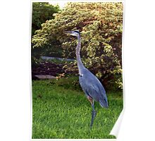 Heron by the seawall Poster