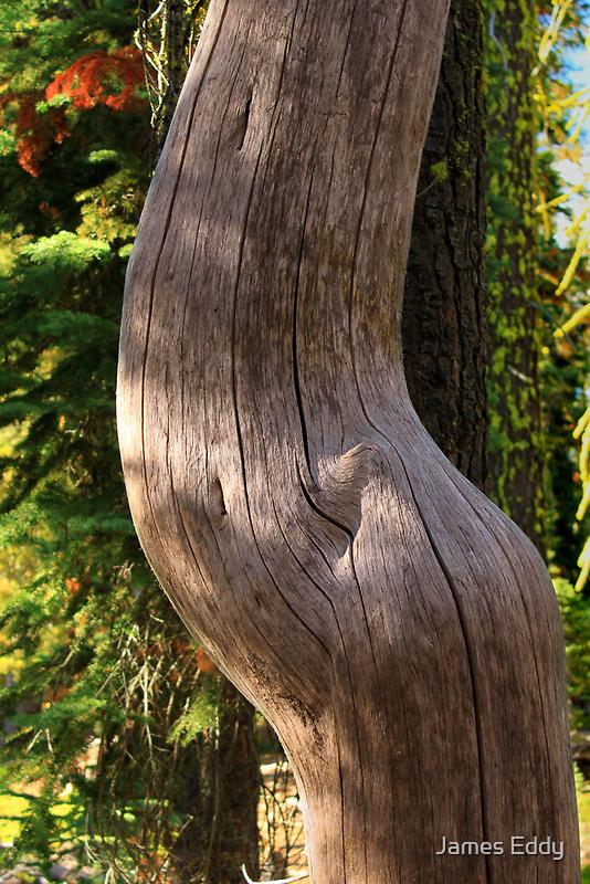 Pregnant Tree by James Eddy