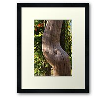 Pregnant Tree Framed Print