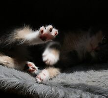 Morris showing her paw by linhere
