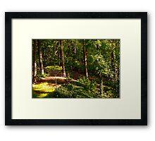 Sun Highlighted Woodlands Framed Print