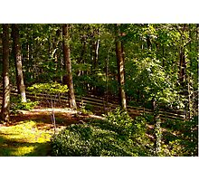 Sun Highlighted Woodlands Photographic Print