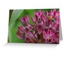Unique bug on pink flower cluster Greeting Card
