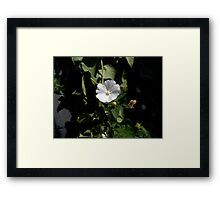 ©NS Bloom In White IA. Framed Print