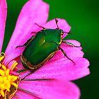 June Bug Beetle Loves Pink by Brenda Burnett