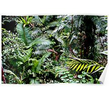 Tropical North Queensland Poster