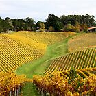 ~ Golden Vines ~ by LeeoPhotography