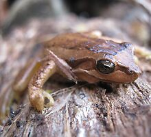 Tasmanian Froglet by Esther's Art and Photography