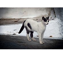 Cats of Greece 5 Photographic Print