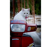Cats of Greece 7 Photographic Print