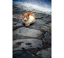 Cats of Greece 10 Photographic Print