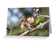 Peach Blossoms Greeting Card