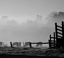 farmscapes #91, beyond fences by stickelsimages