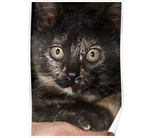 Candy the Kitten Poster