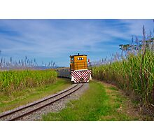"""Coming Through The Canefields"" Photographic Print"