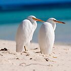 heron Pair - Heron Island - Australia by Anthony Wilson