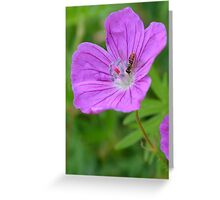 Wild Geranium with little bug Greeting Card