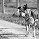 The Road I Walk, I Walk Alone... by Jessica Hooper